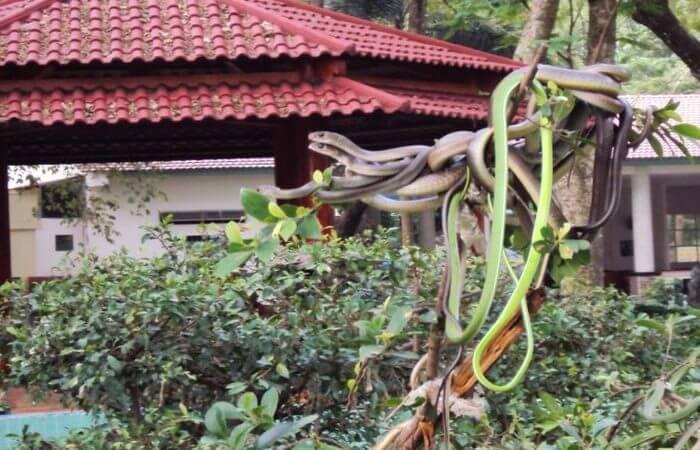 Nhiều loài rắn khác nhau (nguồn Internet)