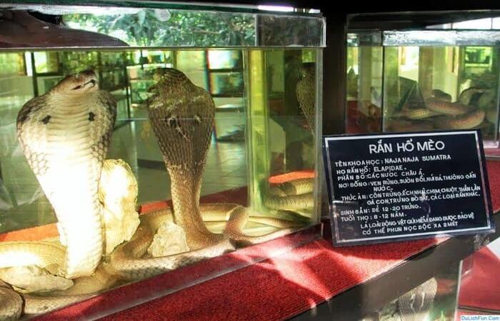 Tham quan bảo tàng rắn (nguồn Internet)
