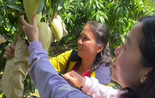 Tham quan vườn cây ăn trái Lái Thiêu(Nguồn Internet)